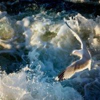 Чайка над морем :: Wirkki Millson