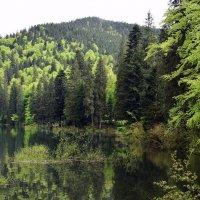 На озере Синевир :: Татьяна Ларионова