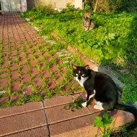 Весенние котики скубают травку :: Александр Деревяшкин