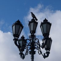 Ворона села на фонарь и стала памятником Птице. :: Люба