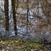 Весенние воды :: Aнна Зарубина