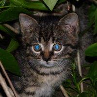 про кошачьих  5 :: Александр Прокудин