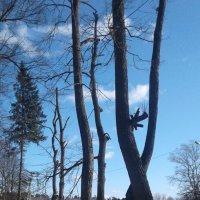 деревья у дороги :: Любовь