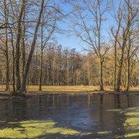 Есть в графском парке чёрный пруд :: bajguz igor