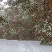 Февраль- прелюдия весны, еще снега и вьюги злые... :: Наталья Димова