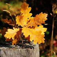 Осень :: краснов юрий