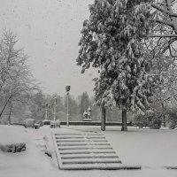Первый снег... :о) (в конце февраля) :: Виктор Грузнов