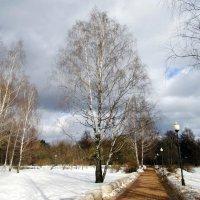 В парке :: Ольга Довженко