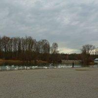 Лебединое озеро... :: Galina Dzubina