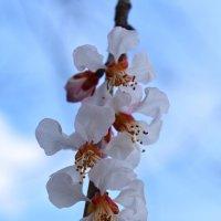 С наступающей весной! :: Nina Streapan