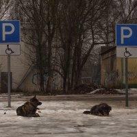 Припарковались. :: Андрей
