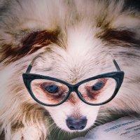 У нас дома появилась ооочень умная собака... :: Дмитрий Кудрявцев