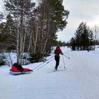 С младенчества-на лыжи! :: Елена Байдакова