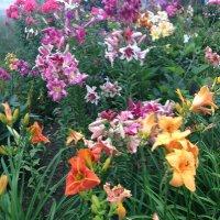В саду :: minchanka