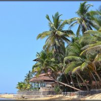 Шри-Ланка. На пляжах Хиккадувы :: Михаил