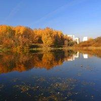 Осень в городе. :: Татьяна *