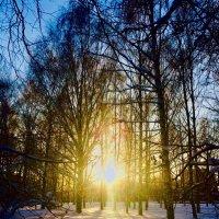 В солнечных лучах :: Татьяна