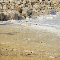 Мертвое море :: Герович Лилия