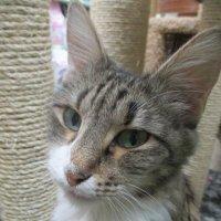 Кошка Баня,в добрые ручки. :: Зинаида