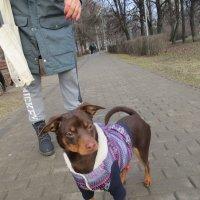 Собака-выгуляка. :: Зинаида