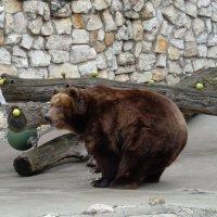 Медведица Роза :: Наташа