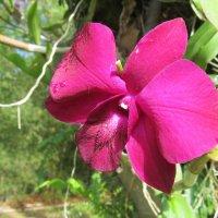остров орхидей, Вьетнам :: Елена Шаламова