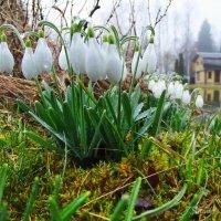 Пришла весна в деревню. :: Елена Kазак