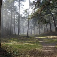 туман в лесу :: ИННА
