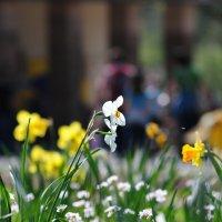 Доброй  всем  весны  ! :: backareva.irina Бакарева