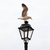 Чайка :: Anna Budyakova