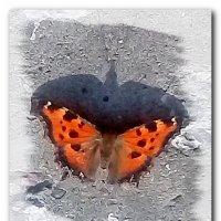 Мартовская бабочка. :: Зоя Чария