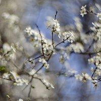 Весна пришла... :: Николай Саржанов