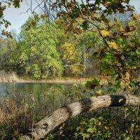 Осеннее озеро :: Антуан Мирошниченко