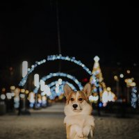 Зима в Королёве :: Анна Пушина