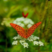 опять про бабочек...49 :: Александр Прокудин