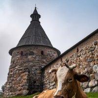 У Башни. :: Ник Васильев