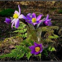 Весенний букет :: Геннадий Худолеев