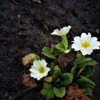Весна! :: Serg