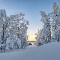 Затерянные в снегах. :: Владимир Колесников