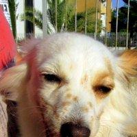 Очаровательная собака в веснушках :: Герович Лилия