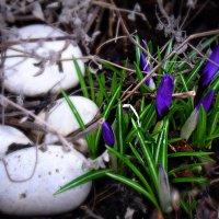 Мир становится цветным - это Весна. :: Татьяна Помогалова