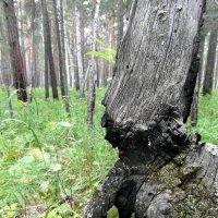 Гном лесной. :: nadyasilyuk Вознюк