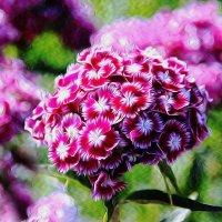Цветы. :: Штрек Надежда