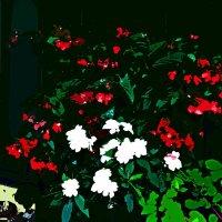 Музыка цветов 65 :: Елена Куприянова