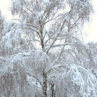 Зимушка зима. :: Владимир Усачёв