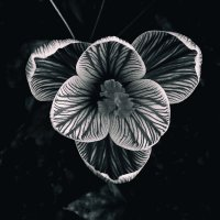 Геометрия цветов :: Виталий Павлов