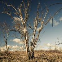 Прогулка по болоту :: Артем Тимофеев