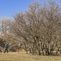 Ещё вчера была весна :: bajguz igor