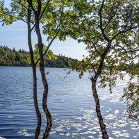 Озеро Святое. :: Ник Васильев