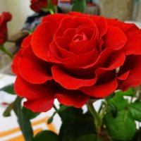 Роза :: Татьяна Р